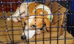 Prefeitura faz programa para castrar 800 animais e lança UPA Veterinária