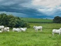 Dupla que abatia bois para furtar a carne em fazenda de MS, são detidos por funcionários