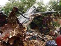 Alerta vermelho: Mato Grosso do Sul tem 63 cidades em perigo e ventos acima de 100 km/h