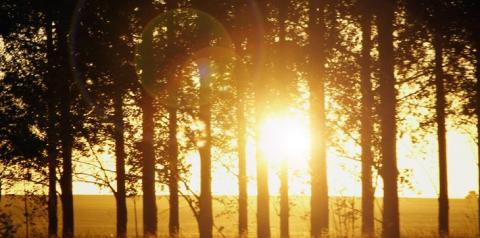 Primeira quinzena de agosto será marcada por calor e tempo seco em MS