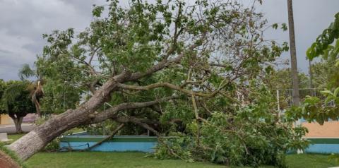 Ventania derruba árvore e abala estrutura de jardim na praça central de Alcinópolis