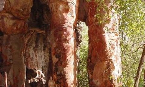 No MS, turismo arqueológico revela história do homem nas Américas.