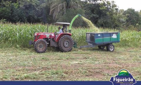 Secretaria de Meio Ambiente realiza a colheita de silagem na Fazenda Pedra Bonita