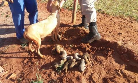 Cadela posa 'agradecida' para foto após ser tirada de buraco com 12 filhotes em MS