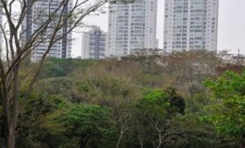 Árvores ajudam a diminuir temperatura em diferentes regiões