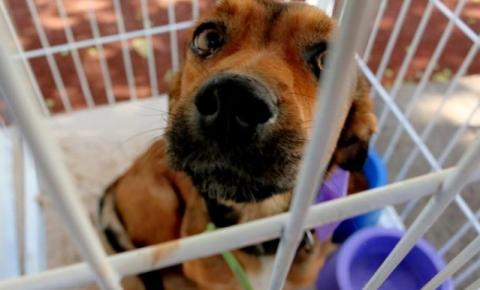 Com 20 pedidos de socorro por dia, ainda é certo ficar comprando animais?