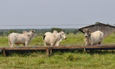 Preço do arroba bovina sobe 12,1% no Estado com maior demanda chinesa