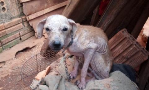 Cachorros morrem por falta de água e comida, e dona diz que não tinha tempo de cuidar