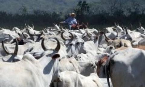 Preço da arroba do boi deve estabilizar em fevereiro