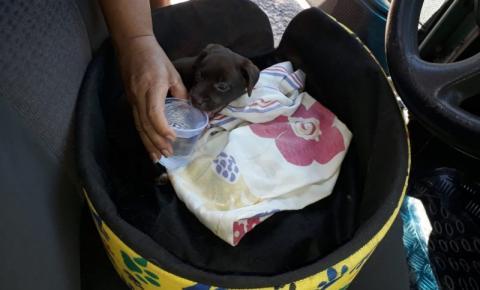 Cachorrinho trancado dentro de carro é salvo por populares no Flávio Garcia