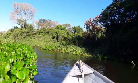 Liminar que permitia exploração do Pantanal é derrubada na Justiça