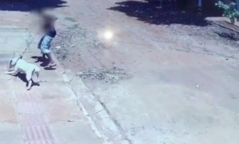 Cachorro fica gravemente ferido após homem instigar pitbull a atacar