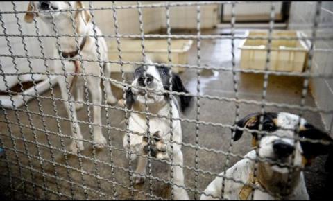 """Projeto de Lei quer punir no """"bolso"""" quem for flagrado maltratando animais"""