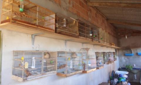 PMA de Costa Rica multa em R$ 3 mil criador de pássaros que extraviou aves Ele já havia sido autuado anteriormente, em outra fiscalização