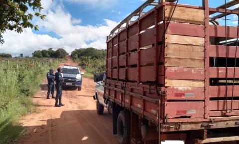 Tio e sobrinho são presos roubando vacas e bezerros em Rio Verde
