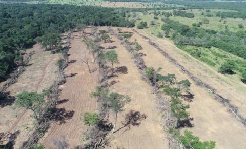 PMA autua fazendeiro e técnica ambiental que se apresentava como agrônoma em Alcinópolis