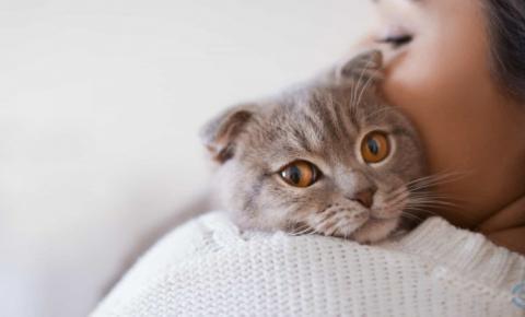 Saiba quais são os benefícios de ter gatos em casa
