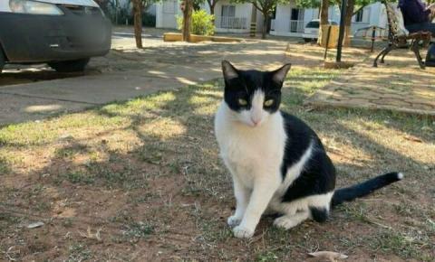 Justiça decide que gato 'comunitário' continuará morando em condomínio no MS