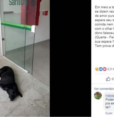 Cachorro 'acampa' em hospital de SP à espera de dono que morreu há 3 dias
