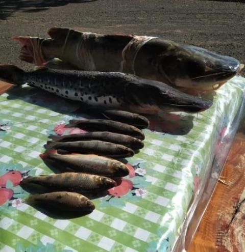 Em Alcinópolis pescadores paulistas são presos e autuados pela Polícia Militar Ambiental por pesca predatória