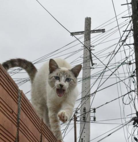 Energisa encontra 'gato' em relógio de funcionário da empresa