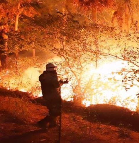 Em Mato Grosso do Sul, a área queimada chega a 32 mil hectares no Pantanal