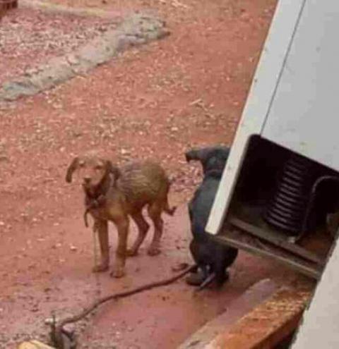 Maus-tratos: donos são presos após deixarem sete cães na chuva e sem comida em MS